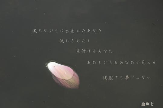 e0075505_17455718.jpg
