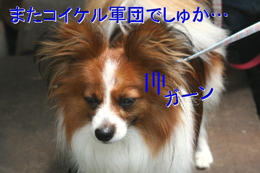 d0013149_10232124.jpg
