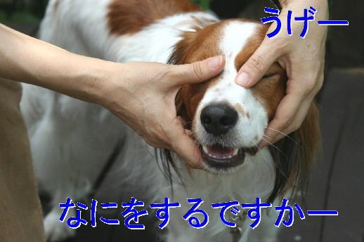 d0013149_16265055.jpg