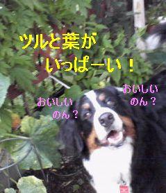 b0090201_1061482.jpg