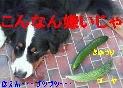 b0090201_9333668.jpg