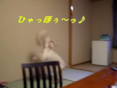b0067012_1413197.jpg