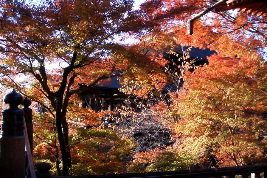 京都、清水寺の紅葉_d0077719_18533094.jpg