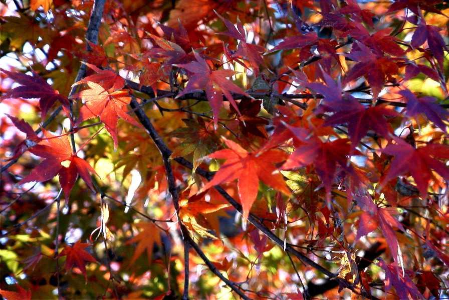 京都 法然院、三千院、天竜寺、東大寺_d0077719_1944145.jpg