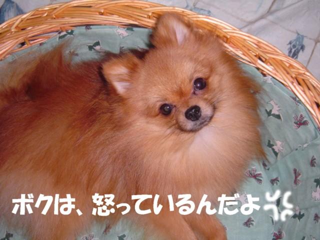 f0012924_4595292.jpg