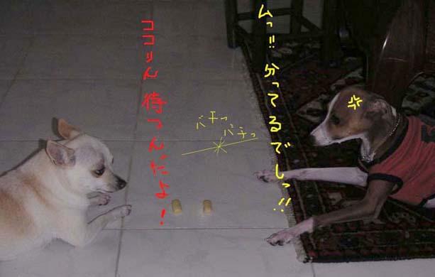 d0051641_1917773.jpg
