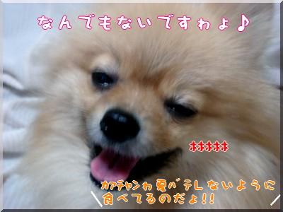 b0078073_19213527.jpg