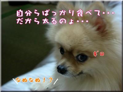 b0078073_1921588.jpg