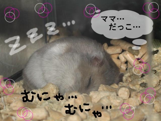 f0097734_3534841.jpg