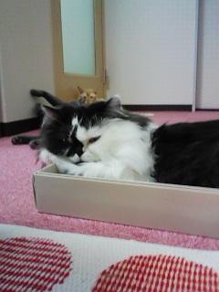 猫カフェ!_c0023353_20135862.jpg