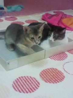 猫カフェ!_c0023353_2022288.jpg