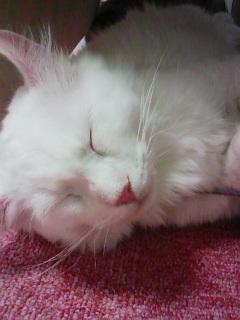 猫カフェ!_c0023353_2028241.jpg