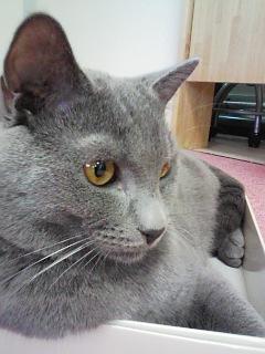 猫カフェ!_c0023353_20344580.jpg