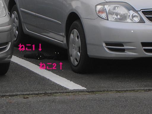 b0044694_1891578.jpg