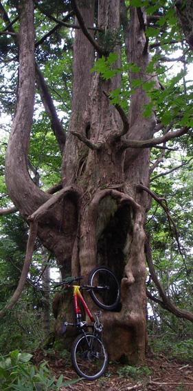 大きな木の下で~_a0062810_16461215.jpg