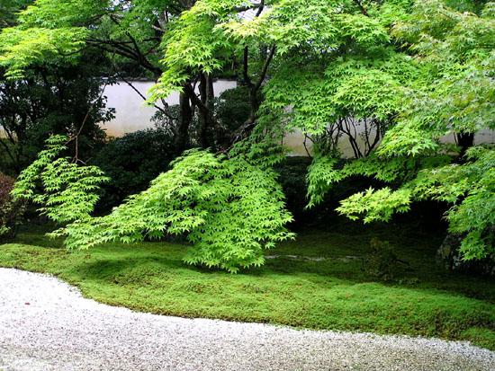 南禅寺 夏を歩く5ー天授庵_e0048413_19282932.jpg