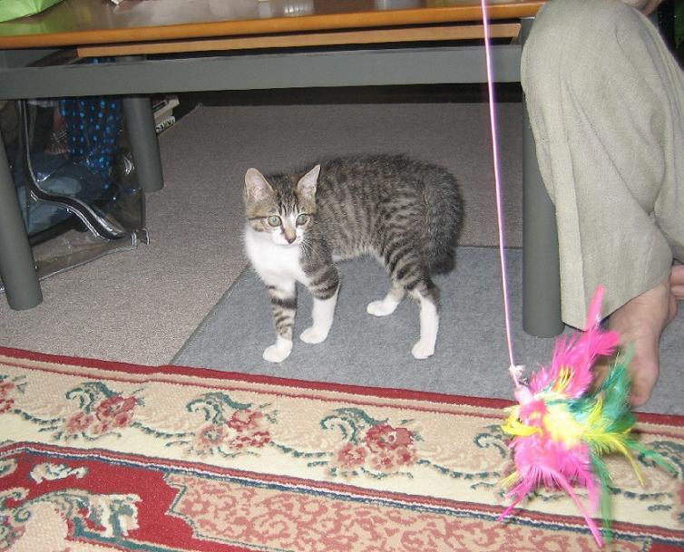 Flying Cat_b0019333_11175051.jpg