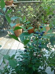 8月の庭&おやじの夏休みpart・2_e0086738_2332184.jpg