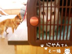ウンチくんとしっこ_e0031853_936454.jpg