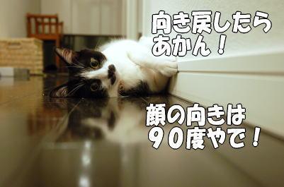 b0041182_21232189.jpg
