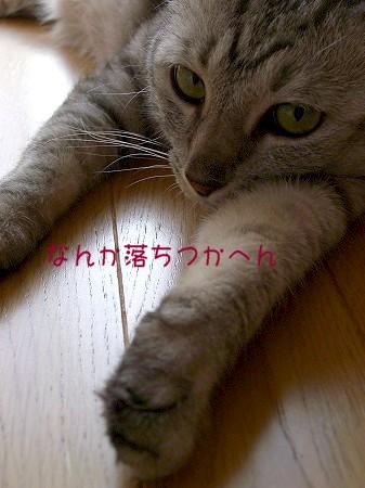 d0005397_1424422.jpg