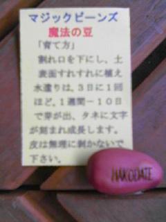 e0067640_19544985.jpg