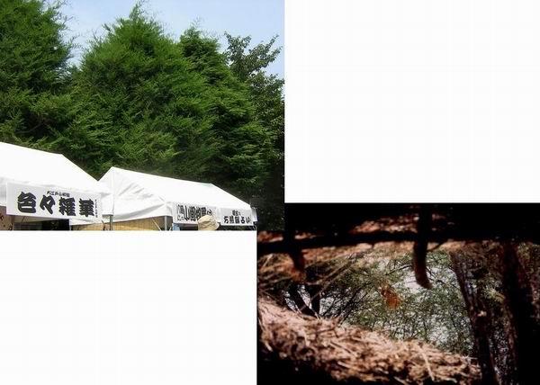 円朝まつりの屋台と40度を越すソマリアの農場の小屋_f0045090_1823366.jpg