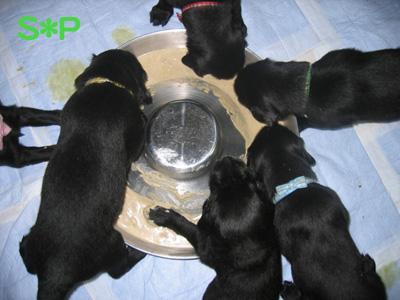 ルフィンパピー'S 離乳食開始!!_b0084194_1623595.jpg