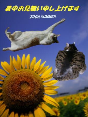 暑中お見舞い_b0105719_221753100.jpg