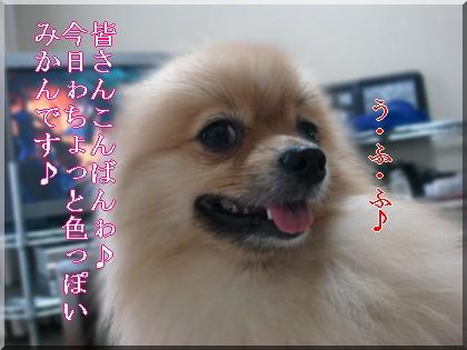 b0078073_2320615.jpg