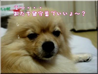 b0078073_23121549.jpg