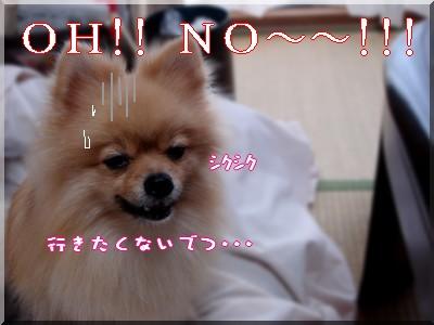 b0078073_2315085.jpg