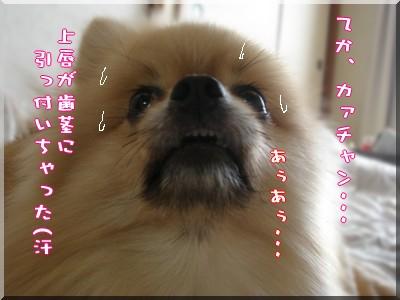 b0078073_23211060.jpg