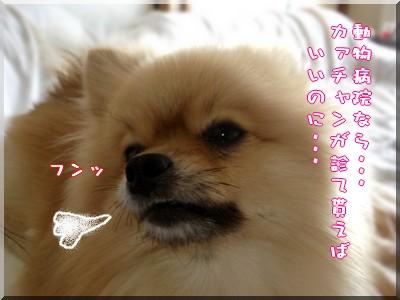 b0078073_23212937.jpg