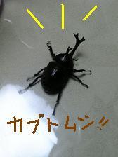 a0042313_21473518.jpg