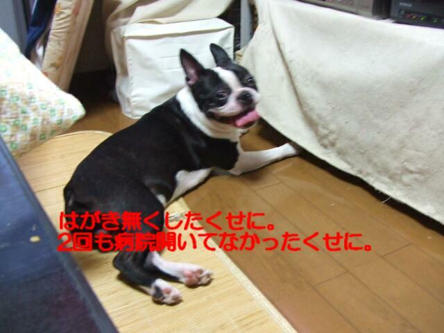 f0059334_925781.jpg