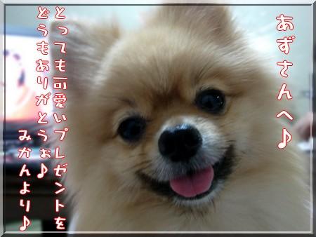 b0078073_23121723.jpg