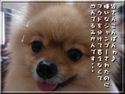 b0078073_2314329.jpg