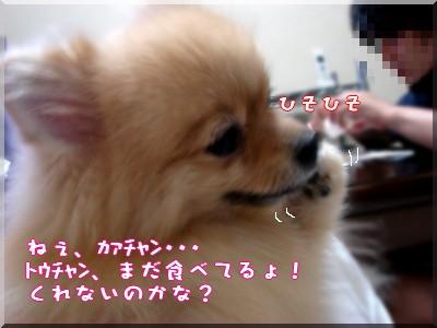 b0078073_2341393.jpg