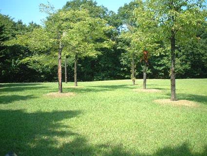 公園で・・・_f0019498_19475614.jpg