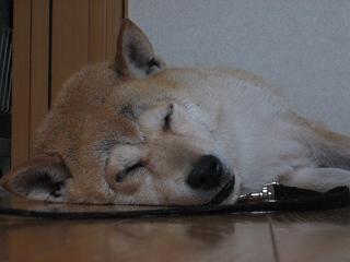 久しぶりの雨。久しぶりの室内犬。_c0049950_20385321.jpg