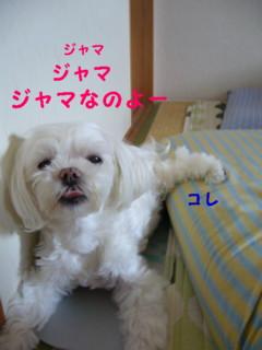 f0005727_16535062.jpg