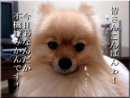 b0078073_22234792.jpg