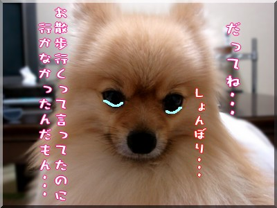 b0078073_22244491.jpg