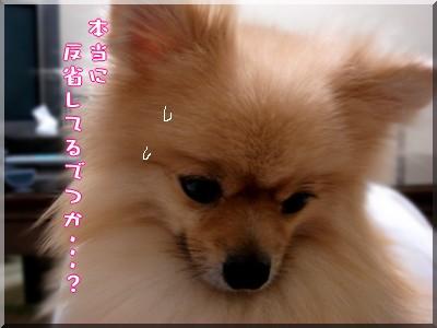 b0078073_22255135.jpg