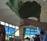 「草津市立水生植物公園 みずの森」の蓮料理_e0002086_9294462.jpg