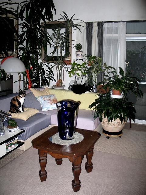 緑に囲まれた美しい暮らし・・・・植物を楽しむ窓_e0010418_8582460.jpg