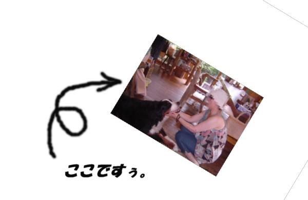 f0012924_511195.jpg