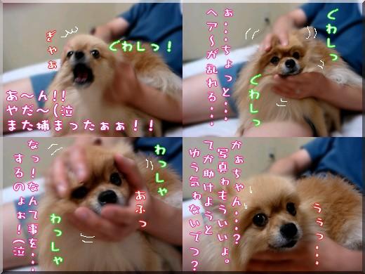 b0078073_22544451.jpg