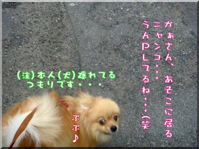 b0078073_22575481.jpg